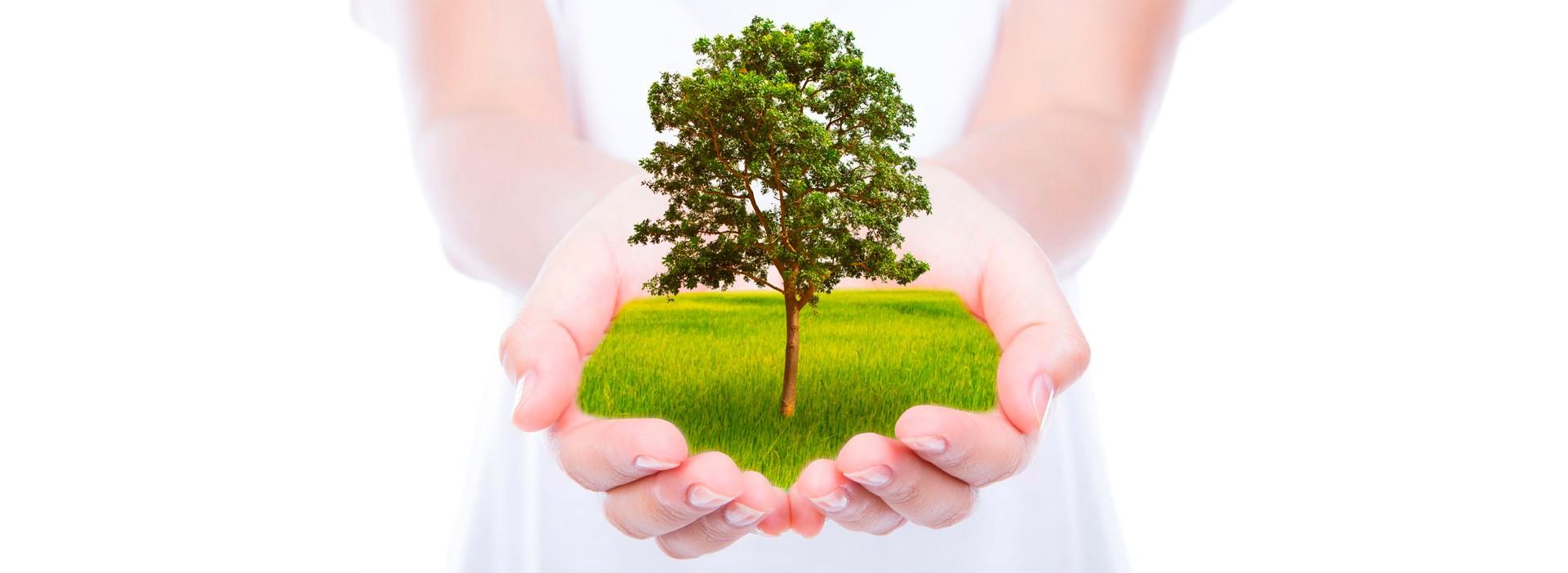 accueil-arbre-main-pureté